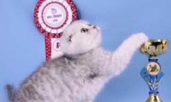 Клуби любителів кішок