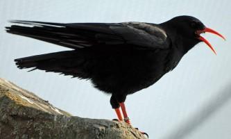 Клушица - птах з марок