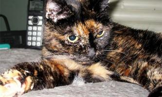 Книга рекордів гиннесса назвала найстарішу в світі кішку