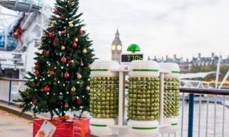 Качани капусти стали джерелом харчування для новорічної гірлянди