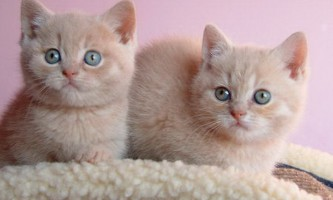 Кого вибрати: кошеня, або дорослу кішку?
