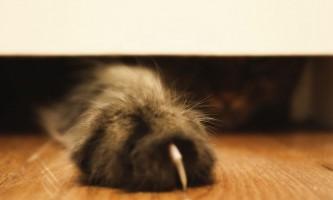 Когтерезка для кішок: види і рекомендації, як їй користуватися