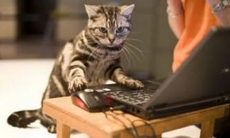 Комп`ютерна гра для кішок