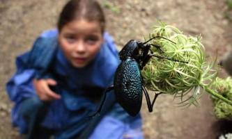 Кінцівки у комах