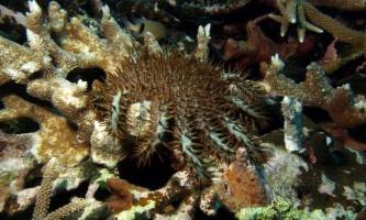 Корали стрімко вимирають