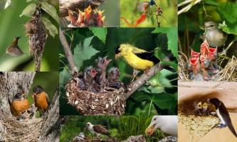 Годування пташенят: унікальні фото живої природи