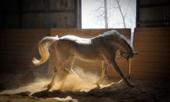 Годування лошат кобил і догляд за ними