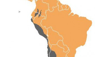 Королівський гриф (sarcoramphus papa)