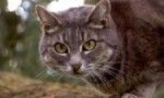 Котячі почуття-навіщо кішки топчуться?
