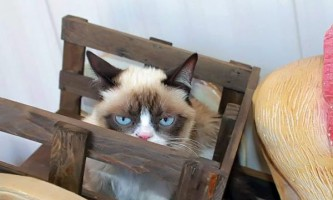 Кішка grumpy cat зніметься в сімейної комедії