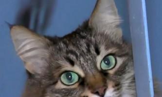 Кішка з обнінська врятувала покинуте немовля