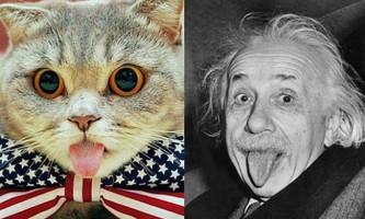 Кішка-ейнштейн з хронічно висунутим язиком підкорила інтернет