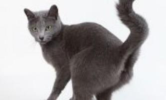 Кішка мітить територію, що робити?