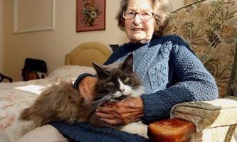 Кішка знайшла господиню в будинку для літніх людей