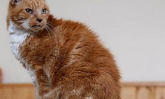 Кішка на прізвисько маргарет - сама довгоживуча кішка великобритании