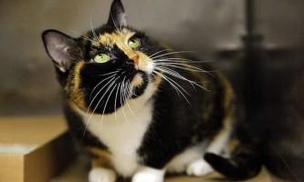 Кішка на прізвисько віллоу за 5 років дісталася з колорадо в нью йорк