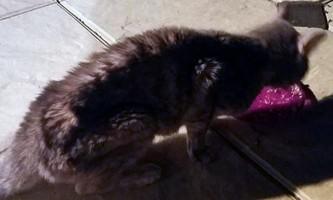Кішка прожила в запечатаному контейнері 49 днів