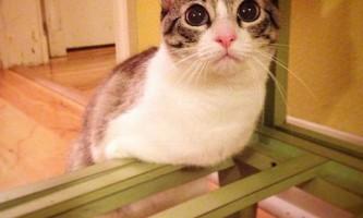 Кішка з двома лапами стала знаменитістю в інстаграме