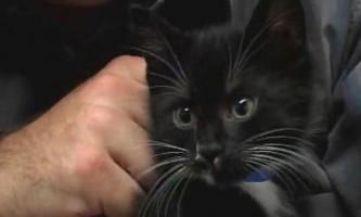 Кішка з кошенятами постраждала від навченого яструба