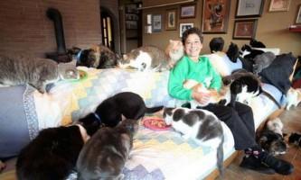 Кішка стала прийомною матір`ю для новонародженого цуценя