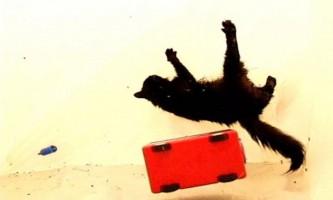 Кішки не можуть приземлятися на лапи в умовах невагомості