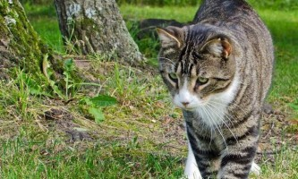 Кішки виявилися здатні розуміти фізику