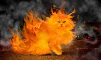 Кішки проти астми