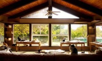 Котячий будинок в каліфорнії