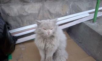Котячі історії зі щасливим кінцем
