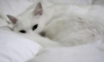Кішку рве після їжі неперетравленої їжею - причини недуги і способи його лікування