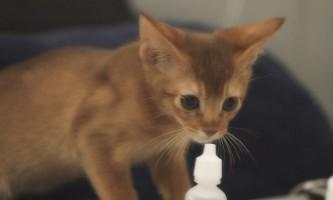 Кот чхає і соплі: що робити в домашніх умовах
