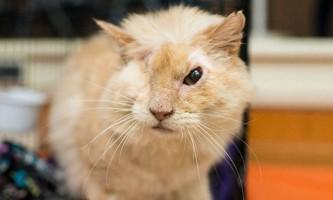 Кот, дружелюбність якого ледь не коштувало йому життя