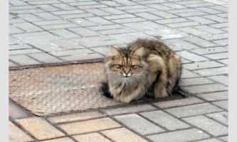 Кот-хатико, який чекав повернення господаря протягом року