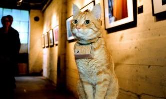 Кот купер - котячий фотограф
