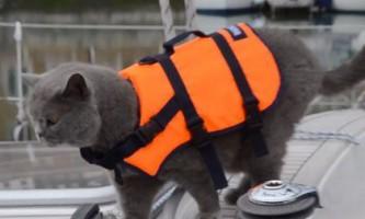 Кот матроскин пропав під час плавання