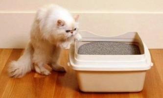 Кіт не ходить в лоток - що робити і як вирішити проблему
