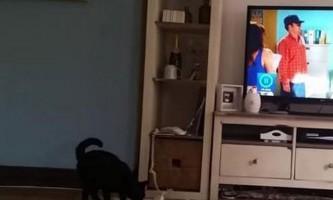 Кіт на прізвисько джак відповідає на телефонний дзвінок