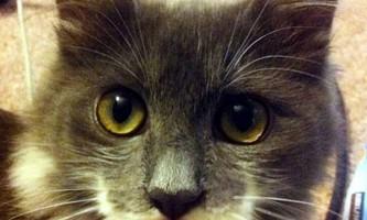 Кіт на прізвисько гамільтон - єдиний в своєму роді