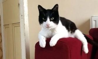 Кіт на прізвисько мерлин побив рекорд по гучності бурчання