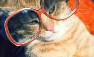 Кіт на прізвисько принц-товстун залишився без будинку