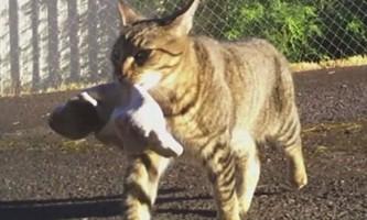 Кіт на прізвисько тигра тягне в будинок все, що погано лежить
