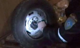 Кіт на прізвисько узбек був врятований з колісного полону