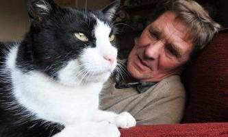Кот відчув рак у господаря