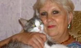 Кот пройшов 3000 км в пошуках тих, хто виїхав господарів