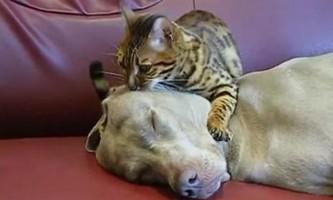 Кот проводить сеанс гіпнотерапії