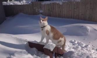 Кот розчищає сніг, щоб вийти на вулицю