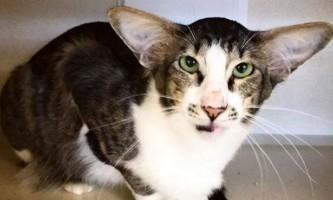 Кот, з подовженою мордою, став зіркою в мережі і знайшов жильців