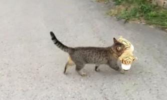 Кот випадково викликав поліцію