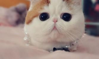 Кот снупі (snoopy) - зірка інтернету