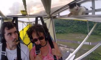 Кот-повітроплавець став зіркою youtube